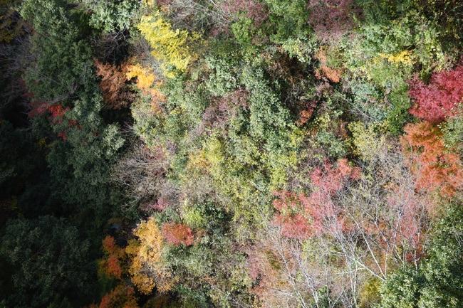 熊本 紅葉