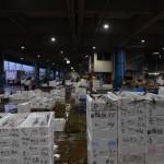 早朝の魚市場に潜入!競りの様子も見てきました