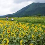 3万本のひまわりが咲く南阿蘇のひまわり畑が絶景だっ...