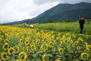 3万本のひまわりが咲く南阿蘇のひまわり畑が絶景だった