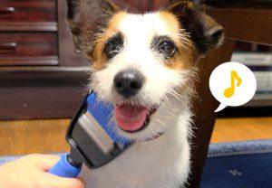 もふもふペットと癒しのコミュニケーション!我が家の愛犬にペット用トリミングブラシ...