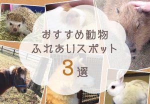 秋はかわいい動物に癒されたい!熊本県内のおすすめ動物ふれあいスポット3つをご紹介...