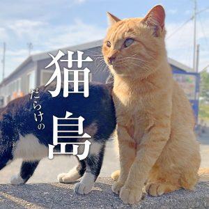 猫が沢山!天草・湯島に行ってきた(withエフのハロウィン