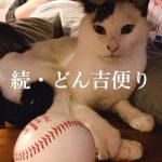 【続・どん吉便り】腎不全と戦う3歳の猫の記録