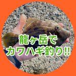 【ちゃんみほの釣り日記】初めてのカワハギ釣りに挑戦...