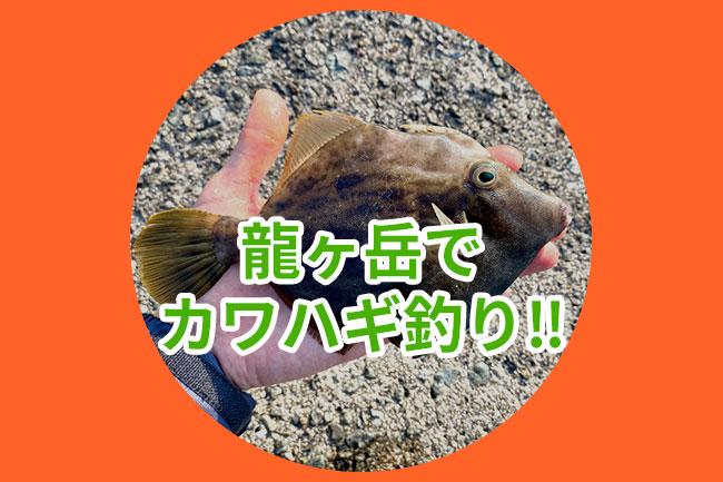 【ちゃんみほの釣り日記】初めてのカワハギ釣りに挑戦!!
